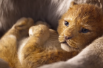 Le Roi Lion a déjà récolté 1 milliard de dollars au box-office mondial